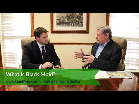 What Is Black Mold? | What You Should Know |  Georgia Mold Lawyer | Toxic Mold Lawyers | Mold Firm