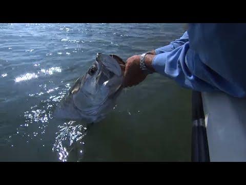 Crystal River Tarpon Fishing the Flats with DOA BFL Lure