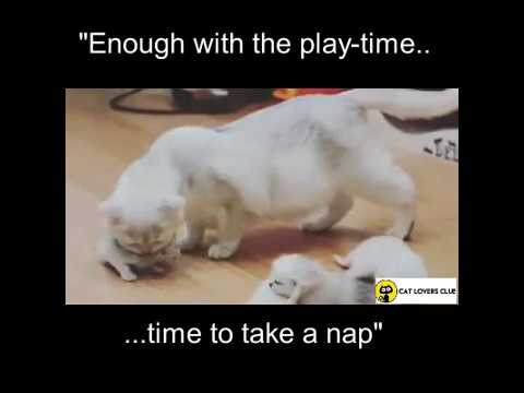 Little Kittens won't go to Bed | Cute Cat Video