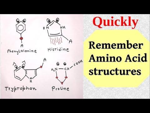 Memorize amino acids