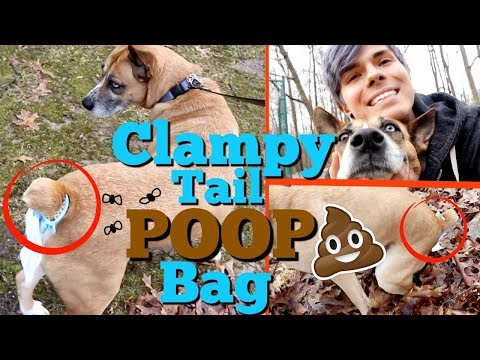 THE ULTIMATE WAY TO WALK YOUR DOG  | Trending-Niche