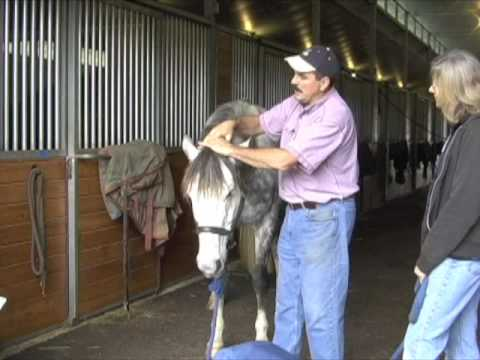 Horse Massage: Releasing the Horse's Poll Using Head-Down Technique using the Masterson Method®