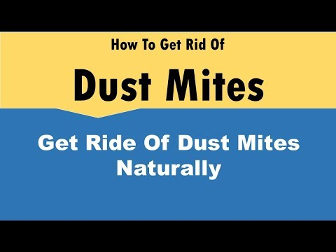 How To Get Rid Of Dust Mites Naturally