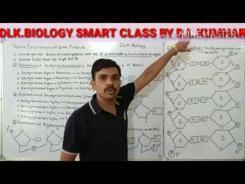 Formation Of DNA Molecule In Hindi