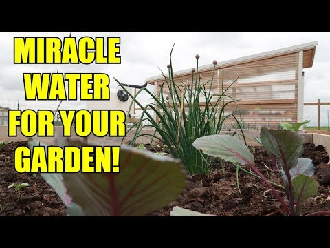 MIRACLE GARDEN WATER ~ BIGGEST BEST PRODUCE!