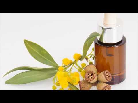 Lemon Eucalyptus Oil Acts As Mosquito Repellents - Natural Remedy For Mosquito Repellents