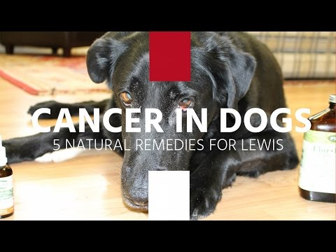 Cancer In Dogs: 5 Natural Remedies