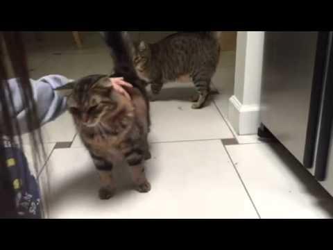 Petting time