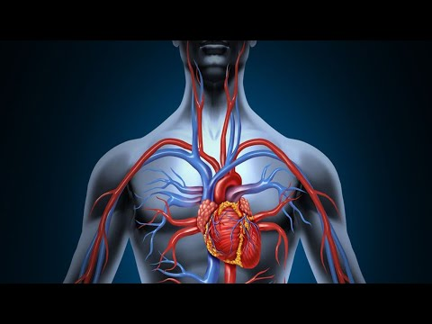 Blood Circulation How to Improve Naturally