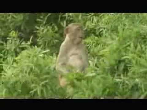 SC's Monkey Island