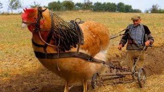 #x202b;اغرب 5 انواع الدجاج , لن تصدق انها موجودة فعلا !!!#x202c;lrm;