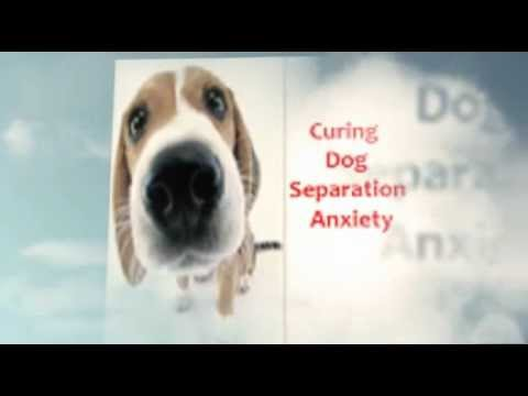Cure Dog Separation Anxiety- There is Hope