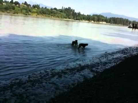 Funny boxers swimming