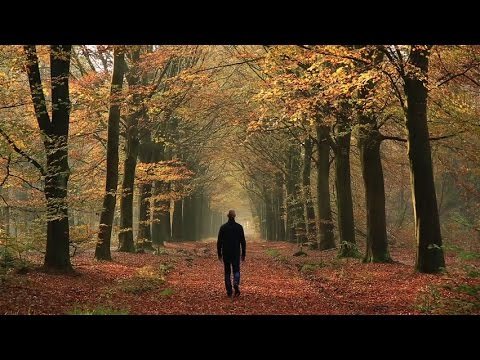 Florestas e Homens (Documentário Dublado)