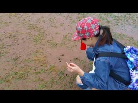 How to catch Razor Clams using salt water of girl Korea