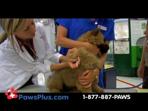 Low cost Dog Vaccinations and Cat Vaccinations by licensed veterinarians near you.