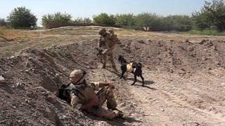 Taliban Goat Attacks  Welsh Guardsman.