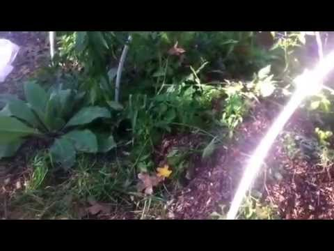 Fall Hugelkultur Mound Update