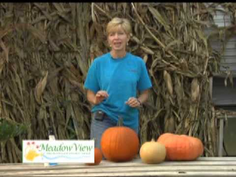 How to pick a good pumpkin? Meadow View Greenhouse and Garden