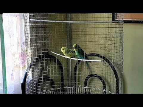 DIY# 86 Bird Cage Using Recycled Materials - Easy
