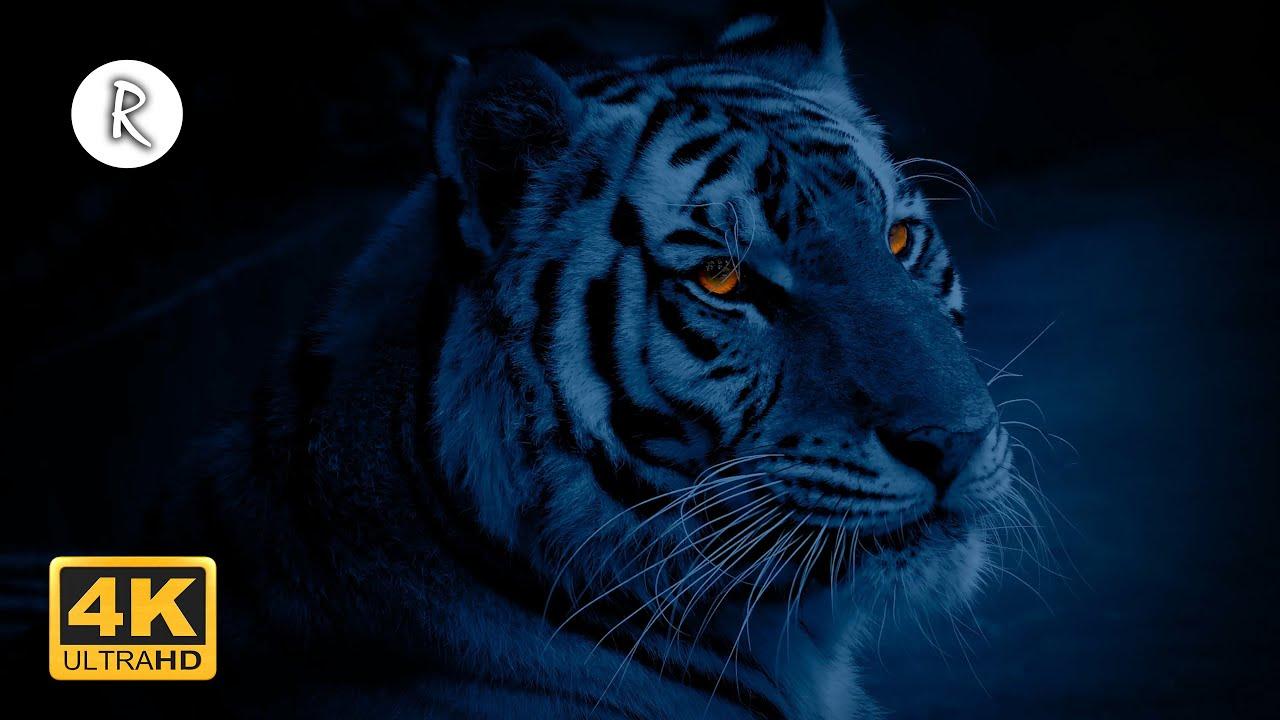 💙🌈 Forest at Night - Wild Jungle Sounds w/ Rain & Thunder, Cicadas 🎧 Nature Sound