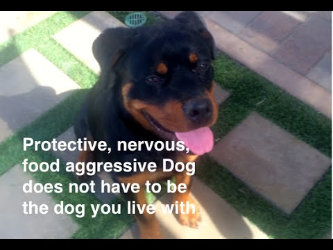 Nervous, Protective, Food Aggressive Dog Training