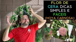 Flor de Cera Dicas Simples e Fáceis (Hoya Carnosa)