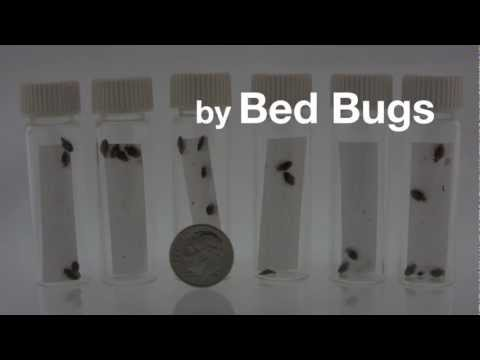 How to Get Rid of Bed Bugs | The ZappBug Oven