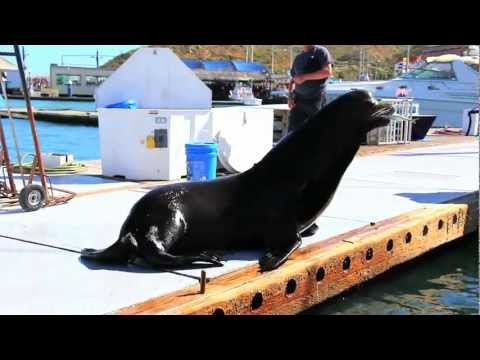 Sea Lion Jumps on Our Boat!
