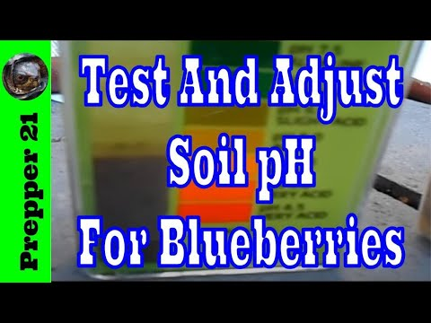 How To Test And Adjust Soil pH For Blueberries And More
