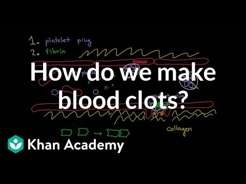 How do we make blood clots? | Human anatomy and physiology | Health & Medicine | Khan Academy