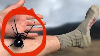 Download Massive black widow spider! Video
