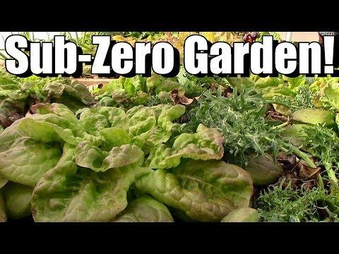 Sub-Zero Winter Vegetable Garden in Unheated Hoop House (Zone 5)