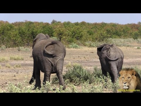 Xxx Mp4 Enjoy The Elephant Walk 3gp Sex