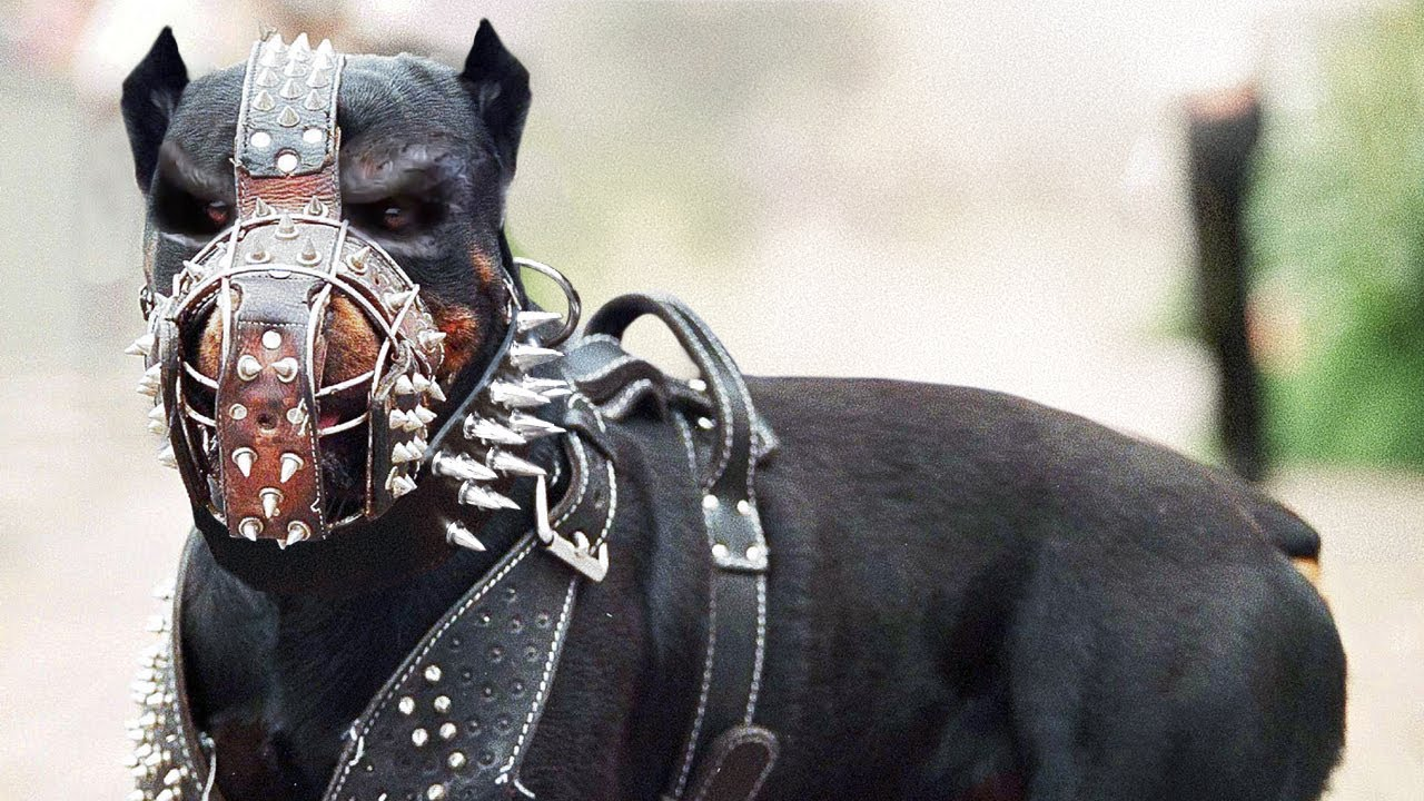 12 Most Illegal Dog Breeds In Action !