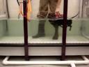 Pepper Rehab - kicking hind legs