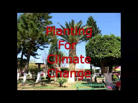 Planting trees for climate change