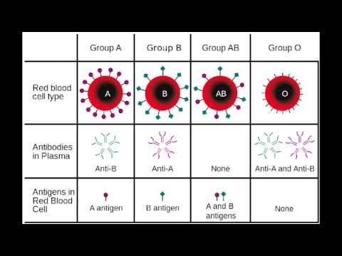 Blood Groups & Rh Compatibility