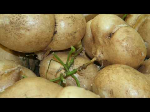 7 Surprising Jicama Benefits - Benefits of Jicama