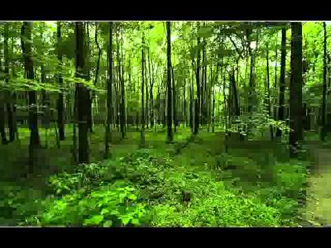 Green Earth Theme Video - Save The Planet