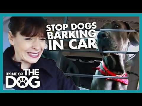 How to Stop Your Dog Barking in the Car