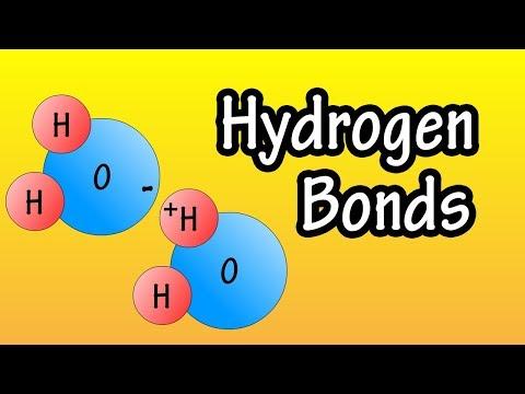 Hydrogen Bonds - What Are Hydrogen Bonds - How Do Hydrogen Bonds Form