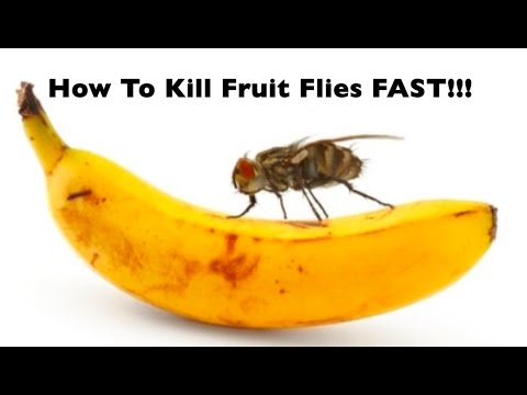 DIY | HOW TO: Get Rid Of Fruit Flies GNATS FAST!!  Quickest & Easiest Way To Kill Flies! Gnats Gone!