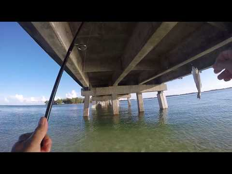 Catching Snook Grouper Mangrove  Snapper Jack Crevalle