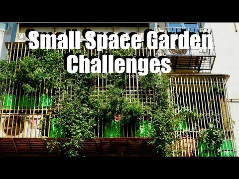 Small Space Garden Challenges: Feat. Mumbai Balcony Gardener // Small Space Garden Series #5