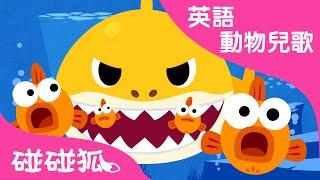 Baby Shark | 鯊魚寶寶 | 碰碰狐!兒童兒歌