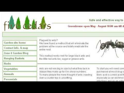The Safe Ways To Get Rid Of Ants If You Have Pets