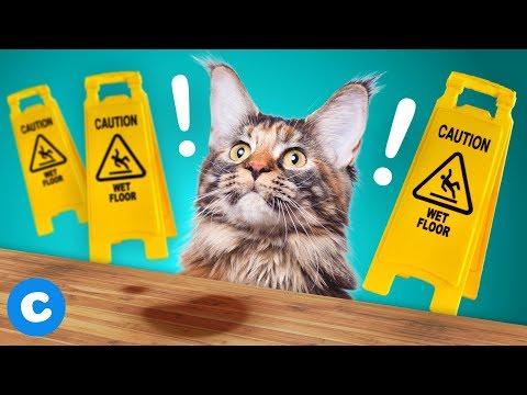 3 Ways to Get Rid of Pet Urine from Hardwood Floors