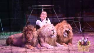 Manuel Farina - Lions & Tigers