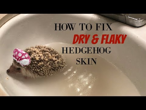 How I Fix My Hedgehogs Dry/Flaky Skin!